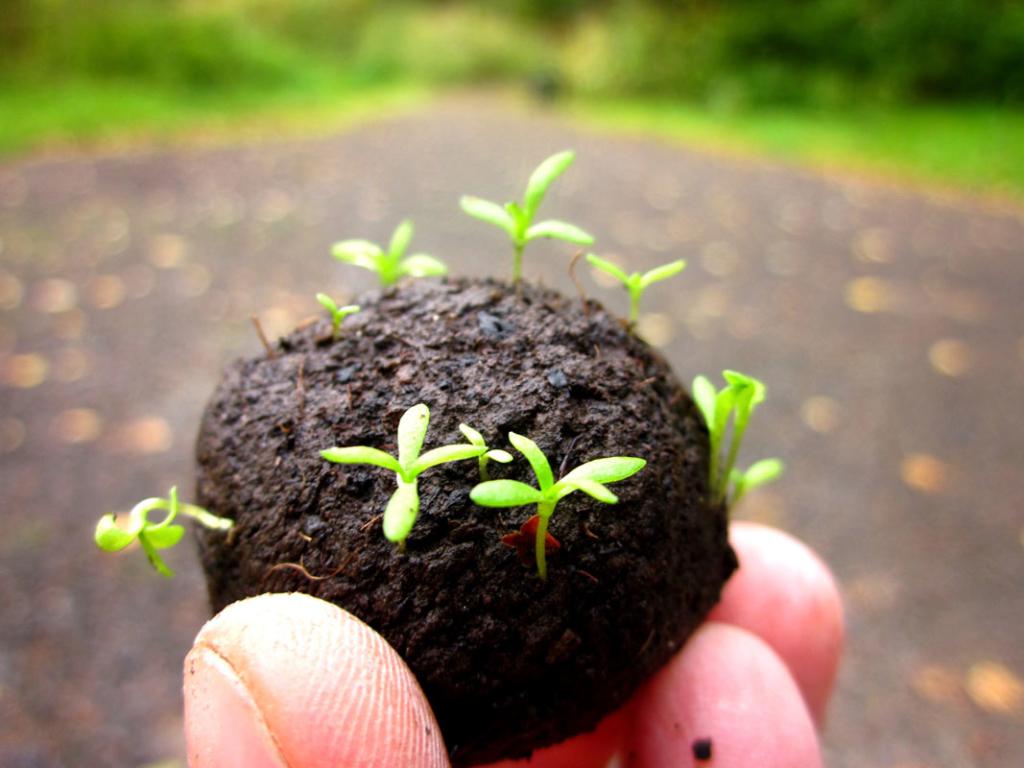 Seedballs1