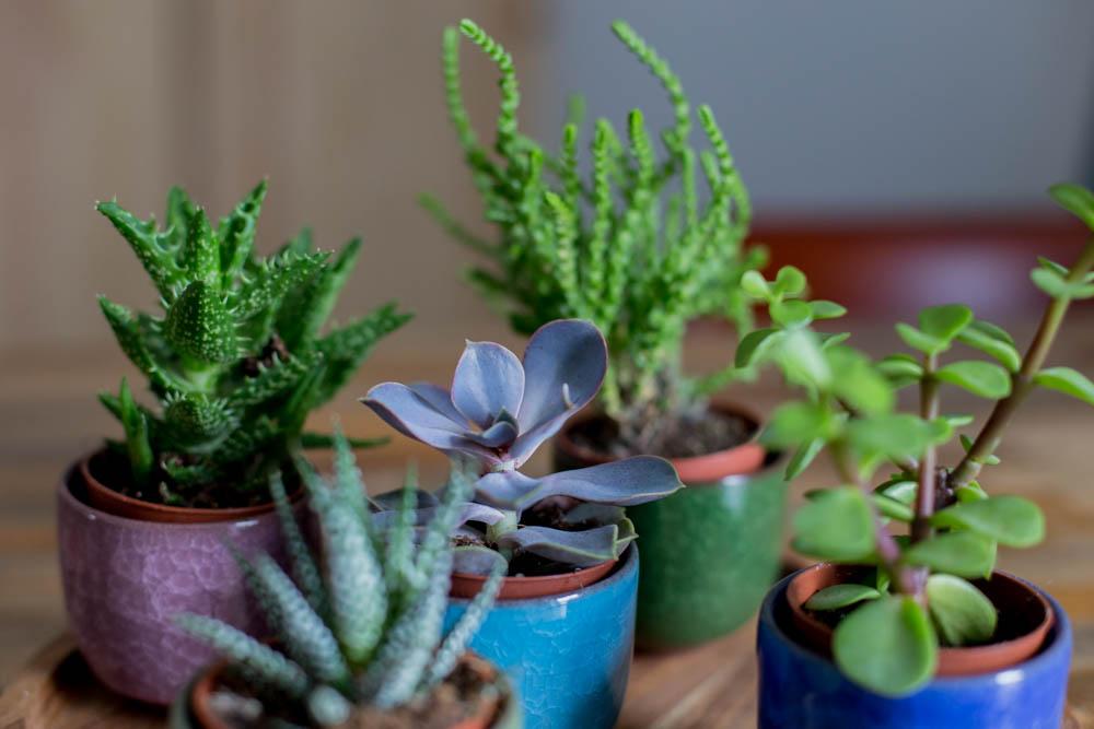 Pflanzen (11 von 12)