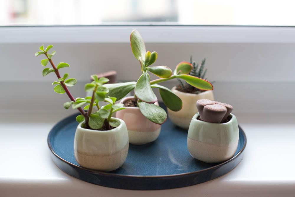 Pflanzen (2 von 12)