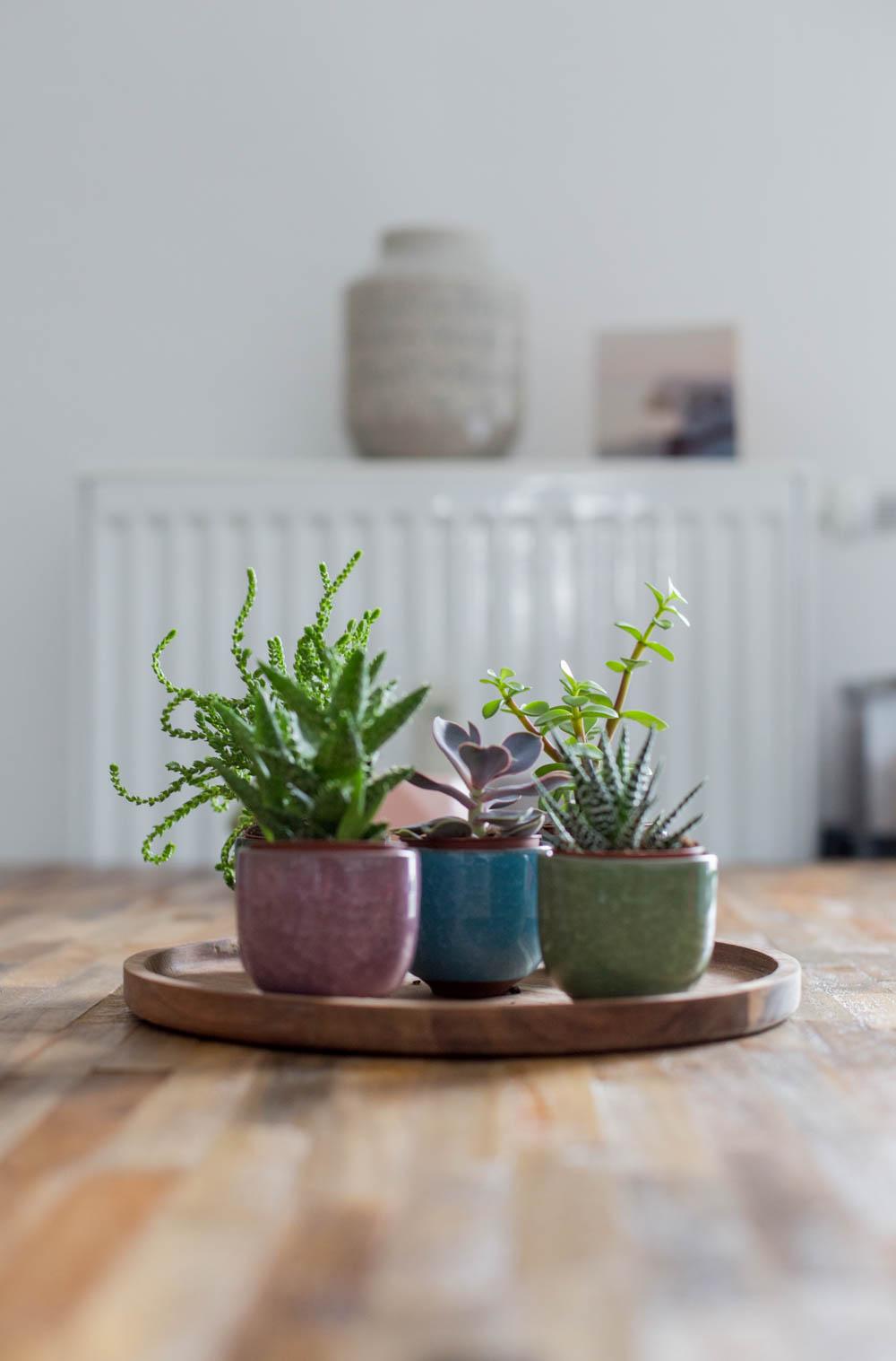 Pflanzen (8 von 12)