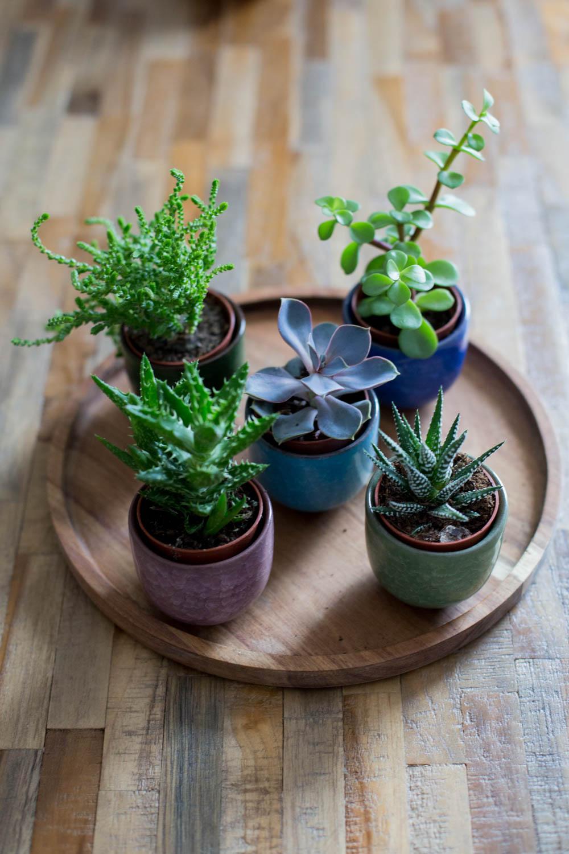 Pflanzen (9 von 12)
